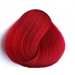 צבעוני מגנטה - Tulip