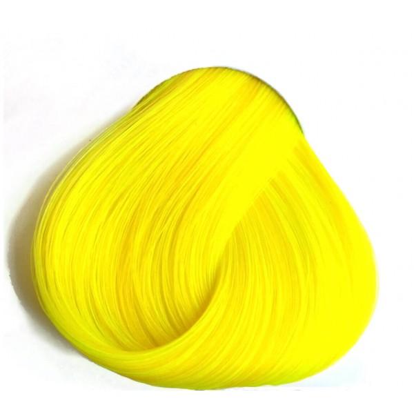 צהוב זועק - Bright Daffodil