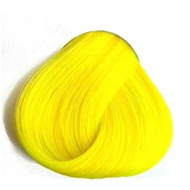 צהוב זועק - Daffodil